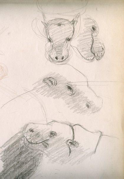 4 dessins animaliers zoo parc animalier