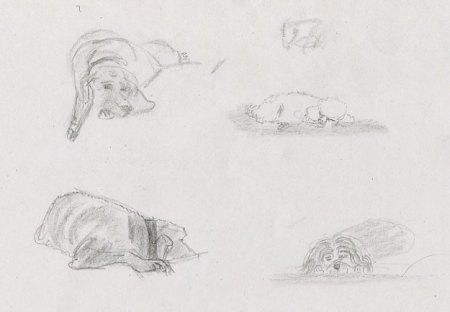chiens endormis dessinés au crayon