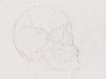 Esquisse de crane-humain dessiné au crayon sépia