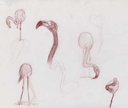 art animalier flamants-roses 5 dessins