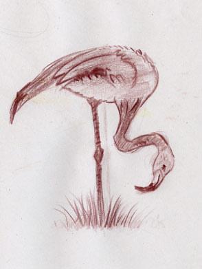 Parc-zoologique flamants dessinés à la sanguine