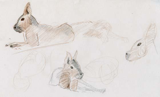Dessins animaliers croquis animaux dessinés au crayon de couleur