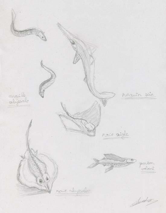 Dessins de poissons de mer