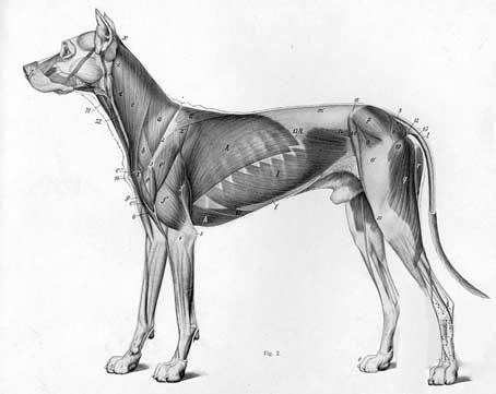 Exceptionnel ❤ Meilleur livre dessin anatomie animaux An Atlas of Animal  UE78