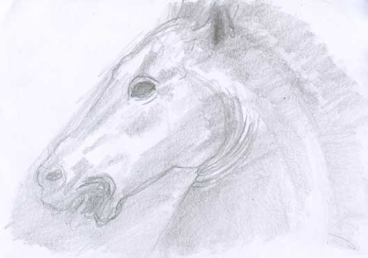 Profil de tête de cheval esquissé