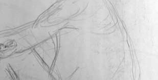 Détail dessin du visage