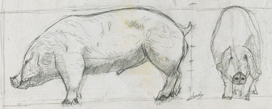 2 croquis animal cochon domestique-dessin-animalier